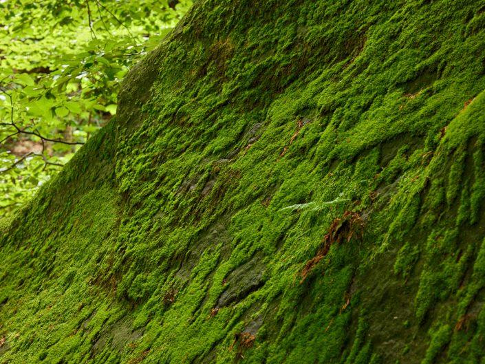 Kleiner Winterberg Sächsische Schweiz